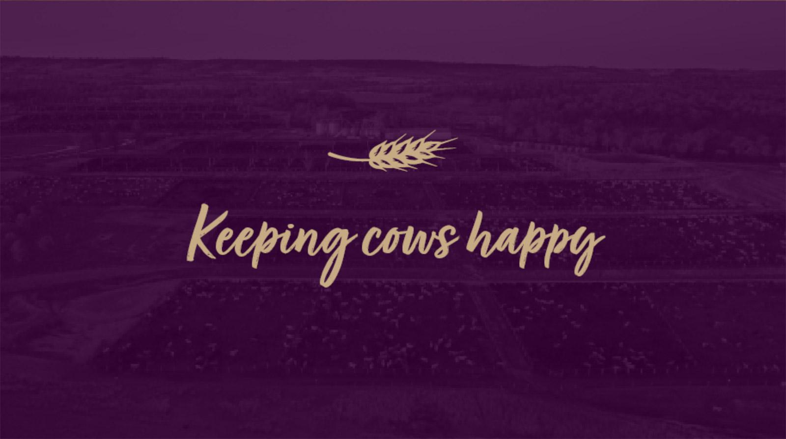 Keeping-Cows-Happy